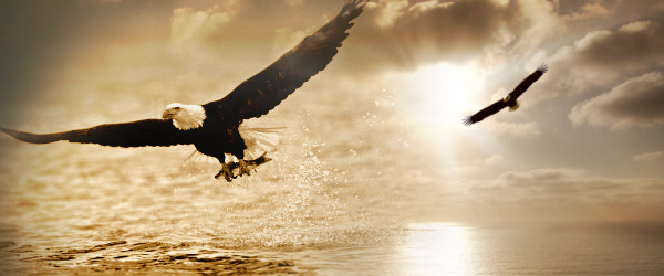 http://www.nehemiahzau.com/wp-content/uploads/2012/08/eagle.jpg